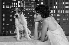 Love her 1920s hairstyle - Berenice Bejo in The Artist