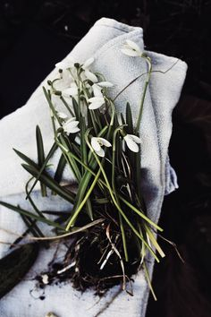 Don't you love it... when a hug usher away those winter blues....Snowdrops our earliest hope.