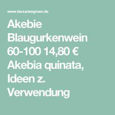 Akebie Blaugurkenwein 60-100  14,80 € Akebia quinata, Ideen z. Verwendung Concrete Wall, Climbing Vines, First Aid, Ideas