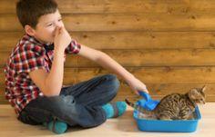 Comment empêcher les mauvaises odeurs dans la litière de votre animal domestique ?