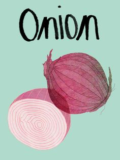 Onion by Claudia Pearson Pattern Illustration, Botanical Illustration, Digital Illustration, Onion Drawing, Watercolor Fruit, Colorful Wall Art, Fruit Art, Grafik Design, Food Illustrations
