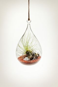 This hanging glass vessel is similar in shape to a wren's nest. In each one, you'll find a mix of moss, lichen, rock or sand, and Tillandsia Air Plants at play. There is something truly magical about these hanging micro environments. These hanging aeriums have become a mainstay in many homes and commercial spaces. As they require no surface area, they are highly versatile and ideal for small spaces. This product comes as a kit. The accompanying photographs depict typical aerium ...