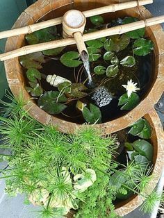 Container water gardens can include all the same features as a pond water garden. some gardeners install elements such as fountains, submersible lights, and fish! Backyard Garden Landscape, Ponds Backyard, Garden Pond, Shade Garden, Garden Pallet, Garden Shrubs, Garden Oasis, Backyard Patio, Container Pond