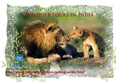 Wildlife tours in India happen to be the most exciting way of having your vacations in the best manner. With exclusive India tour package,the country is blessed with exotic species of flora and fauna that can be explored in the best way by planning for India wildlife tours Contact: info@labanatravels.com or +91-999-927-0794