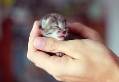 {tiny tabby kitten} kiss kiss