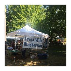 Wild #blueberries are here @trinitybellwoodsfarmersmarket 💙 Visit our blog for more info on this amazing superfood! What local markets do you love? #farmersmarket #shoplocal