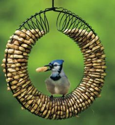 slinky and hanger bird feeder