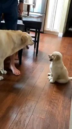 Super Cute Animals, Cute Funny Animals, Funny Dogs, Dog Playground, Cute Puppy Videos, Dog Videos, Majestic Animals, Labrador Retriever Dog, Cute Dogs And Puppies