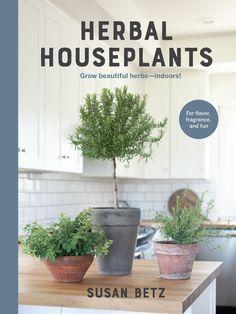 Herbal Houseplants: Grow beautiful herbs - indoors! - National Garden Bureau All You Need Is, Corsican Mint, Michigan, Growing Herbs Indoors, Herb Shop, Ways To Relax, Potting Soil, Grow Lights, Kraut