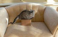 Fergeteges macska-logika – 20 vicces fotó
