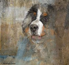 Bernese Mountain Dog Limited edition print by Artfortyeight, £50.00