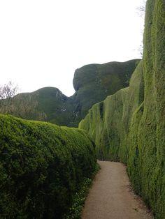 Hedges of Powis Castle