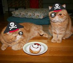 Back off of me donut ye skallywag! @krispykreme #talklikeapirateday #krispykreme #Seamus #GusGus #donut by @seamus_n_angus automatic litter box  cat cats kitty cute catlover catsofinstagram catcam instacat catstagram catsagram lovecats cat product reviews