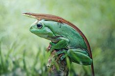 48 Deslumbrantes Fotos Em Alta Definição De Animais Na Natureza Como Você Nunca Viu Antes!