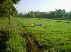 Roripon Buy & Sale WWW.RORIPON.COM  JOINT MEMBER TODAY? FREE CHATTING , BUY SELL , EXPORT IMPORT , VOUCHER DEALS, OR OTHER BEST FOLLOWING.  WWW.RORIPON.COM
