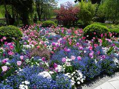 kwiaty wiosenne tulipany niezapominajki