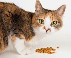Quanto deve comer o meu gato - 9 passos - umComo