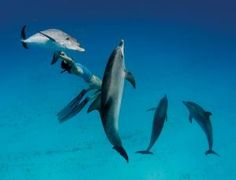 Dolphin whistle instantly translated by computer - life - 26 March 2014 - New Scientist