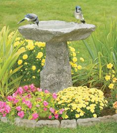 Granite birdbath gives pleasure to the many birds that make my cottage their home too