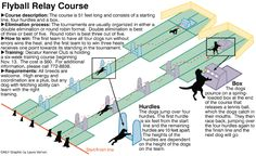 flyball diagram