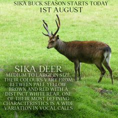 Animal Fact File, Animal Facts, Hunting, Colours, Animals, Animales, Animaux, Deer Hunting, Animal