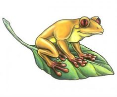 I want a frog tattoo on my ankle but I may be too old and too scared to do it/