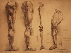 human anatomy 24 by ivany86 on deviantART via PinCG.com