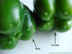 "Tips for choosing peppers: female (4 ""feet"") - full of seeds, sweeter, better to eat raw - male (3 ""feet"") - good for cooking"
