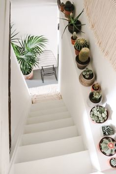 cacti, plants indoors, white stairs