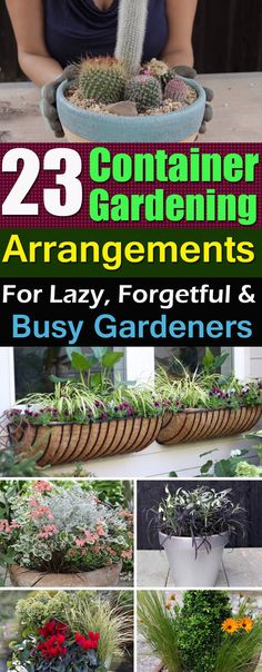 If you're looking for low maintenance and easy container gardening ideas and arrangements, must try one of these!