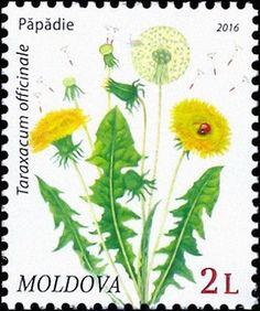 Moldova Postage Stamps (Definitive) 2016 № 954 Taraxacum Officinale, Postage Rates, Dandelion Flower, Flower Stamp, Diy Frame, Stamp Collecting, Postage Stamps, Bonsai, Wild Flowers