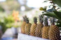 Pineapples! | Photo @robdomjenphoto