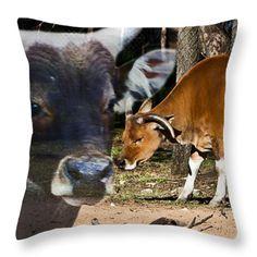 Banteng couple Throw Pillow by Miroslava Jurcik