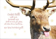 Funny Christmas Reindeer by Mailbox Happiness-Angee at Postcrossing, via Flickr