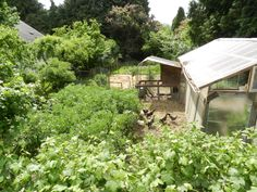 Introduction to Permaculture book -free ebook
