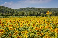 Photos & Videos: Gardening - The Weather Network Margaree, Cape Breton Nova Scotia. Weather Network, Cape Breton, Sunflower Fields, Nova Scotia, Beautiful Places, Canada, Gardening, Photo And Video, Videos