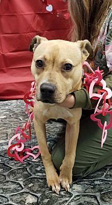 Pictures Of Zeb A Labrador Retriever For Adoption In Henderson Nc Who Needs A Loving Home Dog Adoption Pets Pet Adoption