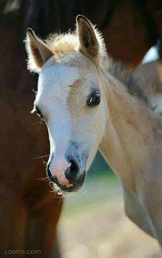 Good morning!  Not my photo  #EECustomHorseShoes #decoratedhorseshoes #etsy #horseshoes #horses #goodmorning