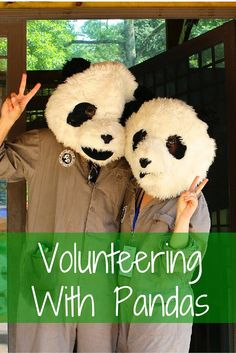 Your ultimate resource on how you can volunteer with Panda's while travelling through China. Volunteering with Pandas in China - FreeYourMindTravel