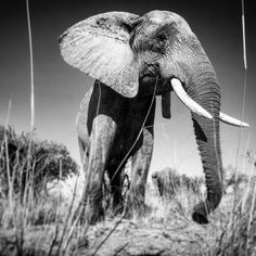 Photographed on assignment for @natgeo with @intotheokavango in the Okavango Delta. @thephotosociety @natgeocreative @eddiebauer #okavango15 For more images follow @intotheokavango @jameskydd and @markstonephoto by coryrichards