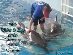 Visit Winter and Hope at the Clearwater Marine Aquarium - Pixie Dust Savings