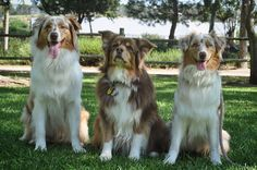 #nationalsiblingday me and my brother Dallas and our cousin Sydney #aussiefamily by tori_the_aussie