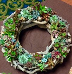 Succulents on driftwood wreath. Attached with tacky glue and mist once a week to water. Use air plants?