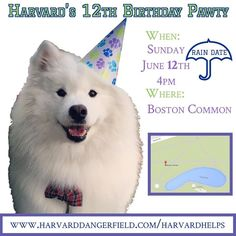 PAWTY RAIN DATE!  NEXT Sunday June 12th 4pm.  My fluffy heart is so full from everyone's generous donations to my Birthday Pawty Fundraiser - we are over halfway to our goal!  Every penny counts and thanks to the generosity of @snowystarbuck every person who donates at least $10 will receive an ADORABLE Samoyed face sticker (I'll post photos of it tomorrow - or you can find it on Snowy's insta!) Info on how to donate: http://ift.tt/1zDCnm1  THANK YOU ALL SOOOO MUCH!