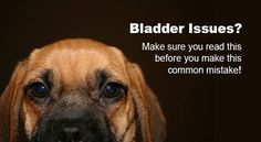 Urinary Tract Infections are common in dogs so it's important to understand that the cause of your dog's bladder problem might not be what it seems.