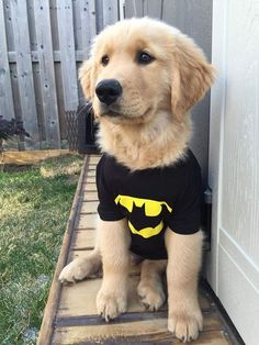 It's getting closer to Halloween, and this pup's already got his costume! Does your dog go trick-or-treating?