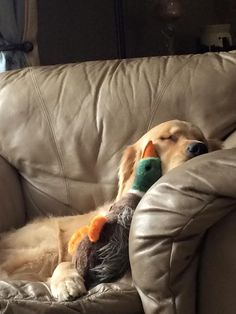 My kind of duck hunting!