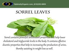 Including greens in your diet is definitely a healthy choice! Sorrel leaves are widely known for its nutritional benefits. #stayhealthy #gethealthy