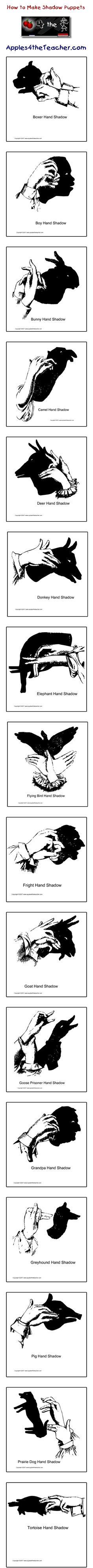 How to make different shadow puppets, Groundhog Day shadow puppets  http://www.apples4theteacher.com/holidays/ground-hog-day/hand-shadows/