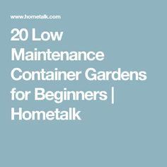 20 Low Maintenance Container Gardens for Beginners | Hometalk